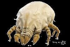 acari - Insetti, animali e agenti infestanti