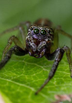 disinfestazione ragni crop u4157 - Ragni