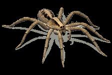 ragni - Insetti, animali e agenti infestanti