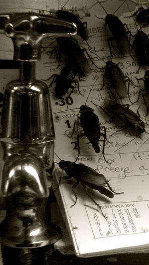 scarafaggi crop u3646 - Blatte