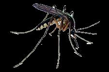 zanzare - Insetti, animali e agenti infestanti